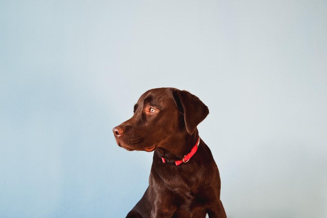 Dieta BARF dla psa - przepisy i jadłospis